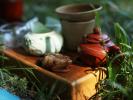 Літні чаювання на природі